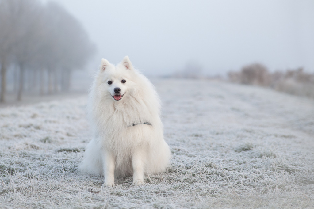 Как предотвратить появление колтунов у собаки