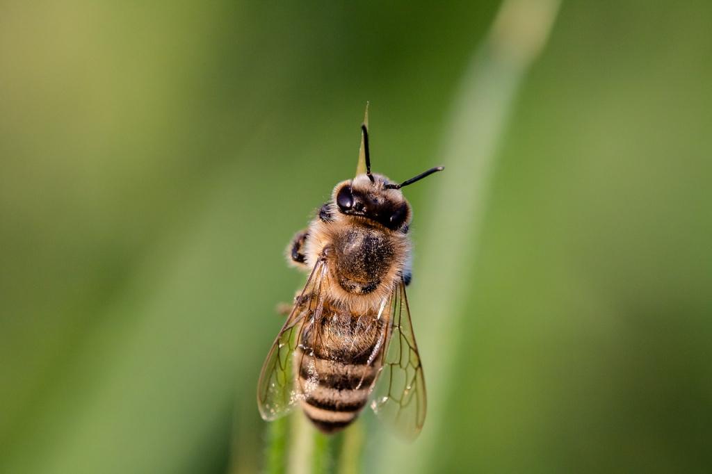 Насколько опасен пчелиный яд для собак