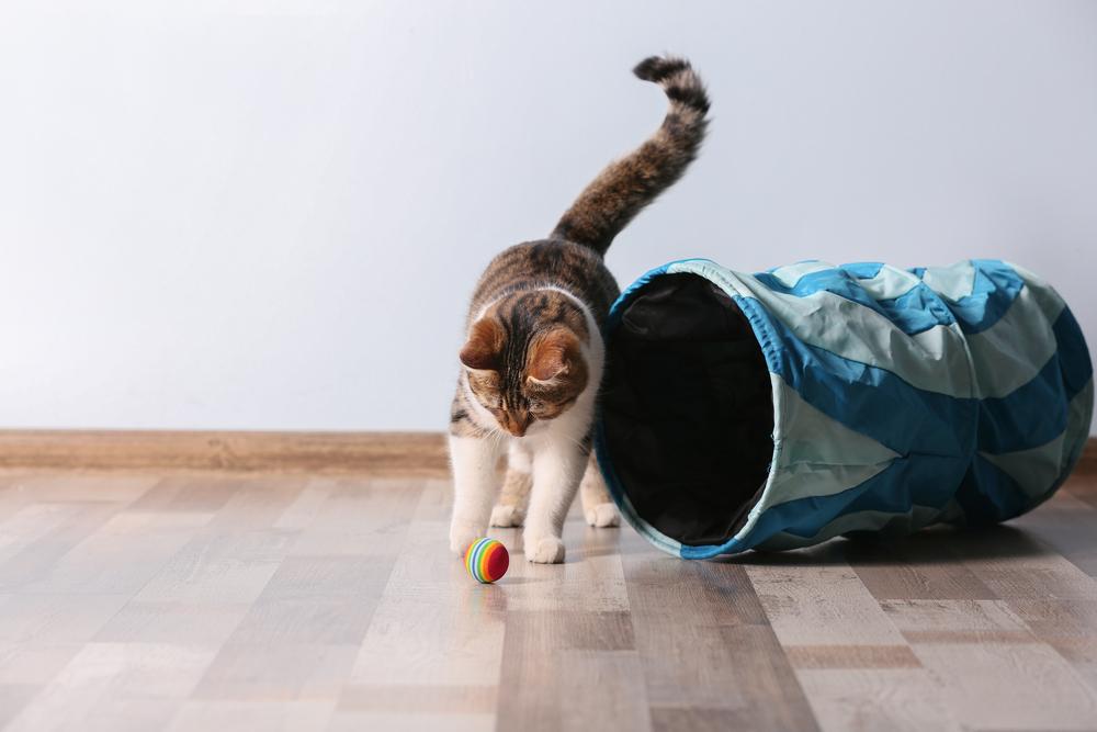 Приемы для дрессировки кошек