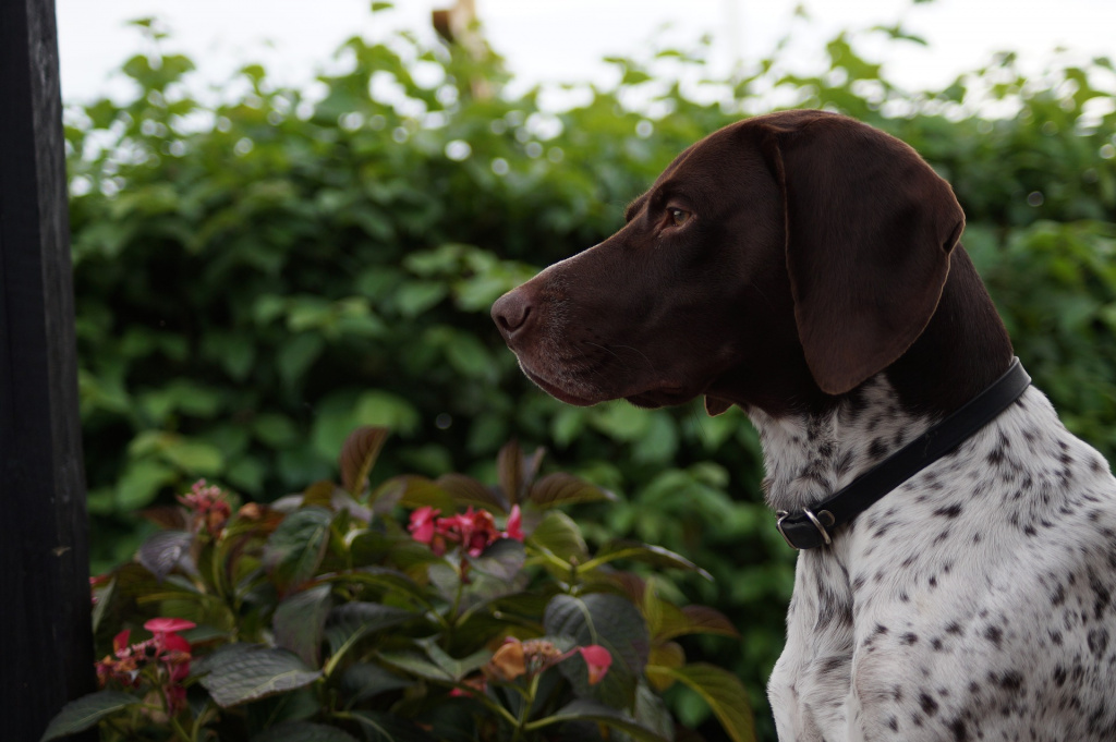 Как порода собаки влияет на ее отношение к одиночеству